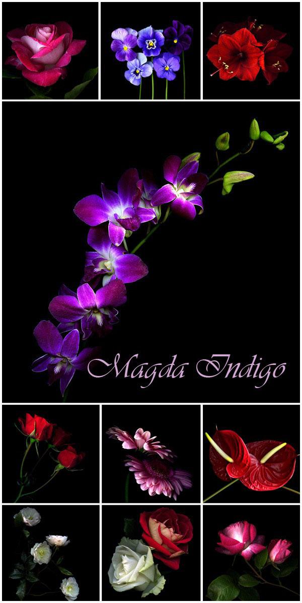 Мир фотографии. Магда Индиго