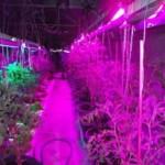 Как правильно выбрать освещение для комнатных растений?