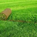 Качественный рулонный газон из Краснодара