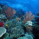 ВЧерном море наглубине около 2 тыс. м найдены живые организмы