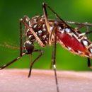 ВОЗ: в67 государствах зафиксированы случаи передачи вируса Зика