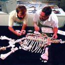 Русские палеонтологи обнаружили новый вид динозавров