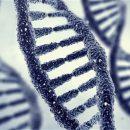 ДНК будет основой для восстановления облика— Ученые