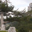 Ученые отыскали самое старое дерево вевропейских странах