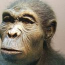 Ученые установили, что предок человека Люси могла умереть, свалившись сдерева