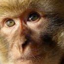 Собаки и обезьяны способны судить о людях по их поступкам