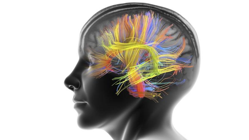 У человеческого мозга всегда готов план Б
