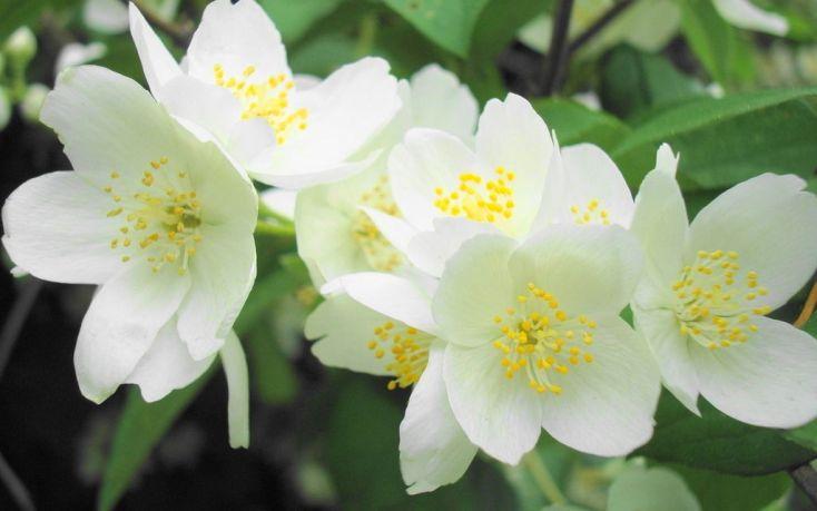Двенадцать видов цветов, которые исцелят ваше тело