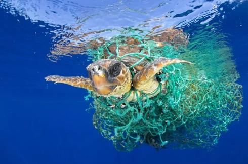 ООН объявляет войну пластиковому мусору в океане