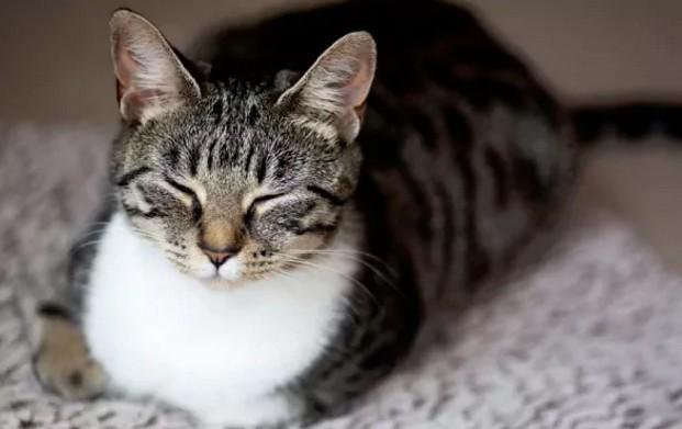 Исследование: кошки больше всего любят проводить время с людьми