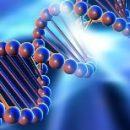 Учёные доказали возможность создания компьютера на основе ДНК