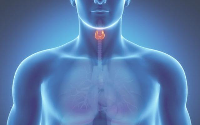 Пять самых полезных и пять самых вредных продуктов для щитовидной железы