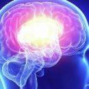 Учёные по-новому взглянули на работу памяти