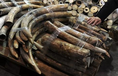 Глобальное потепление неожиданным образом способствует незаконной торговле мамонтовой костью
