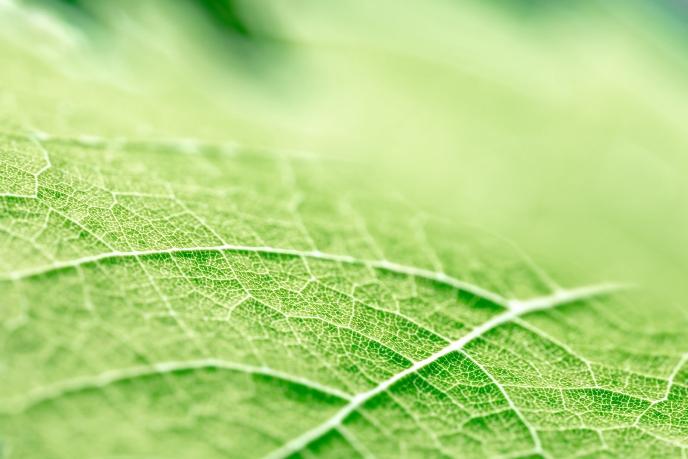Прожилки листьев могут подсказать, как продлить срок службы батарей