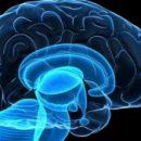 При нехватке сна клетки мозга «поедают» сами себя