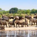 Дроны и ИИ помогают остановить браконьерство в Африке