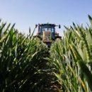 Monsanto для защиты сельскохозяйственных культур от болезней делает ставку на ИИ