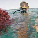 Морские водоросли могут стать ключом к созданию долговечных электрических батарей