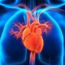 Светочувствительные бактерии помогут спасти пациента во время сердечного приступа