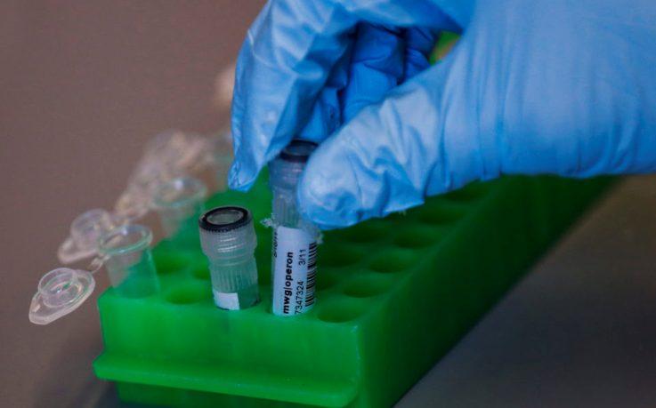 Прорыв в генной инженерии