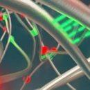 Исследователи из Гарварда разработали жёсткую самовосстанавливающуюся резину