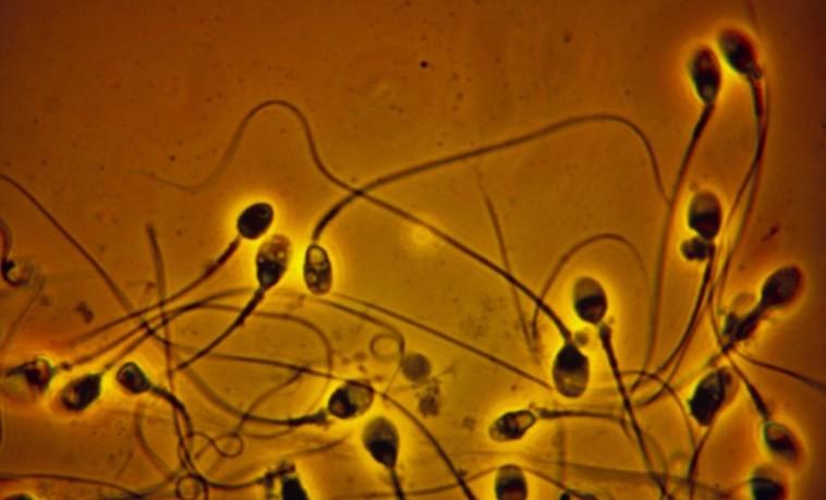 Исследование: количество сперматозоидов у западных мужчин катастрофически снижается с начала семидесятых годов
