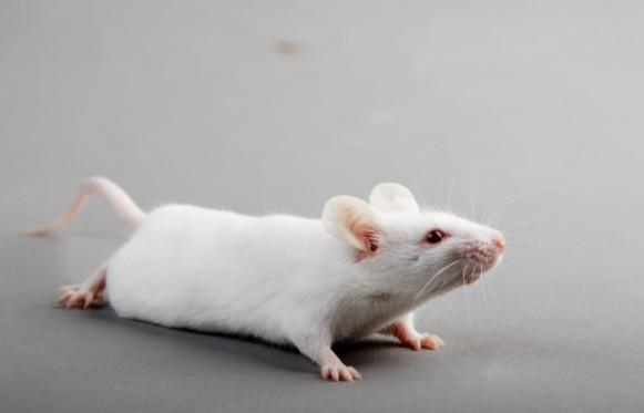 Молекулярный коктейль помогает восстановить повреждение спинного мозга