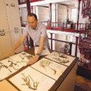 Искусственный интеллект способен идентифицировать для науки многочисленные виды растений