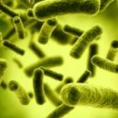 Учёные научили сверхмощные бактерии использовать свет для получения полезных веществ