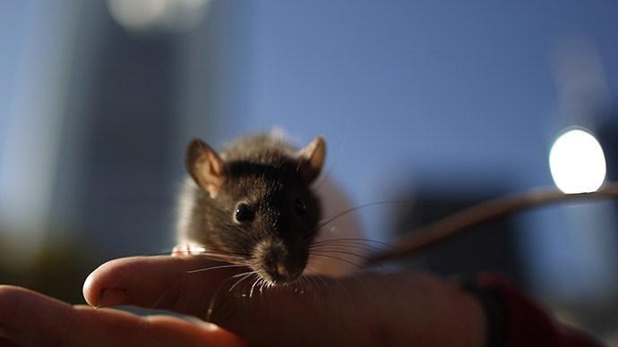 Магниты в мозге заставляют мышей двигаться по команде