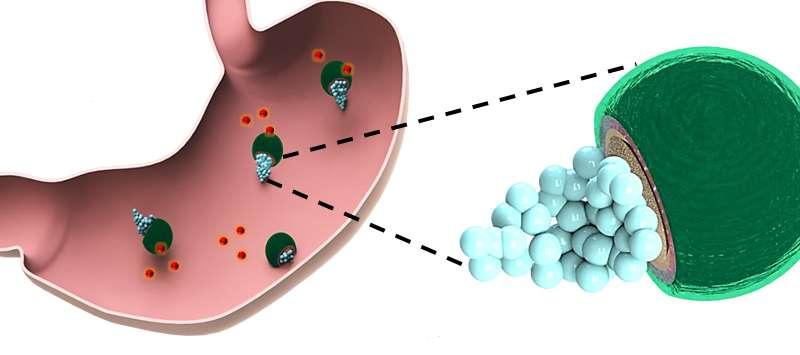 Учёные впервые использовали микромоторы для лечения бактериальной желудочной инфекции