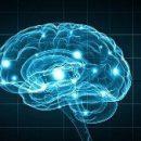 Предложенное агентством DARPA устройство ускоряет обучаемость на 40 процентов