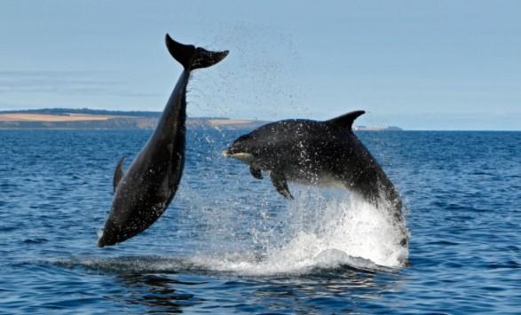 Дельфины вполне могли бы создать общество, подобное человеческому