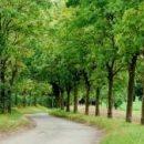 Озеленение планеты способно снизить содержание углекислого газа в атмосфере