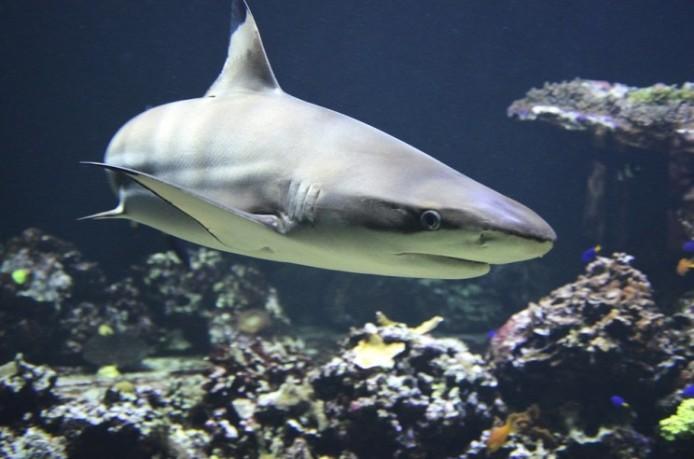 Покрытие, созданное по образу акульей шкуры, избавляет от 99 процентов поверхностных бактерий