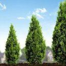 Исследование: во всём мире в городах деревья стали расти быстрее