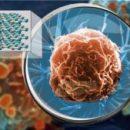 Гиперлинзы из натурального кристалла позволяют видеть вирусы на поверхности клеток