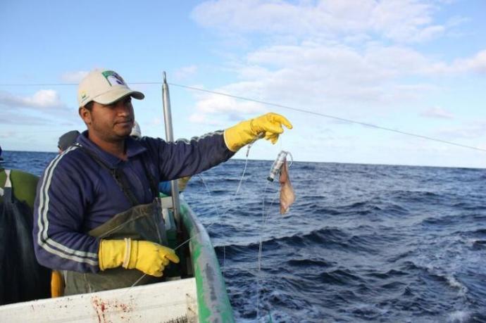 Создано устройство, которое может спасти морских птиц от попадания в орудия рыбного лова