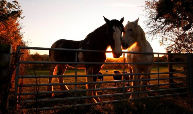 Животные обладают эмоциями – и тому есть научные доказательства