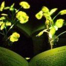 Инженеры создают растения, которые светят как лампы