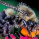 Усовершенствованные пестициды могли бы убивать насекомых-вредителей, не затрагивая пчёл