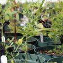 Как ученые собираются защищать растения от засухи