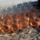 Алкоголь вызывает повреждения ДНК, способствуя возникновению опасных заболеваний