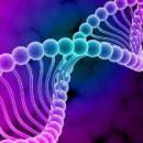 Структуры ДНК используют при создании наноразмерных оптических антенн