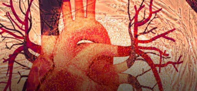 Патч из стволовых клеток пациента может исцелить повреждённое сердце