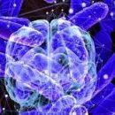 Как кишечник управляет нашим разумом и как это можно использовать