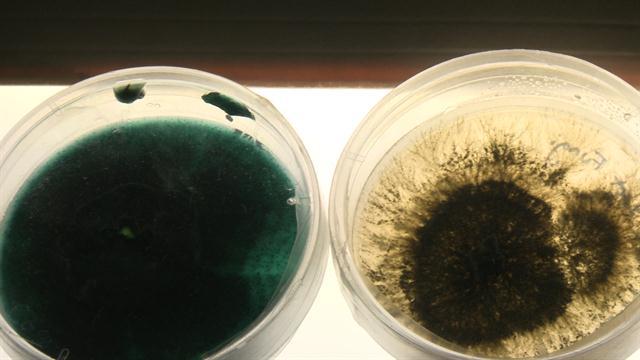 Бактерии, питающиеся нефтепродуктами, могут помочь очистить загрязнения и разливы