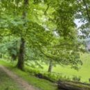 Зелёные зоны — лучшая защита городских жителей от депрессии