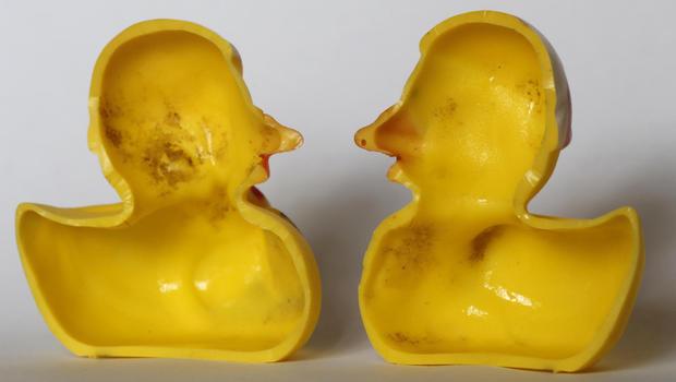 Резиновые игрушки могут быть убежищем для опасных микробов